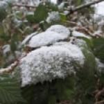 Fergeteg (Boldogasszony) hava