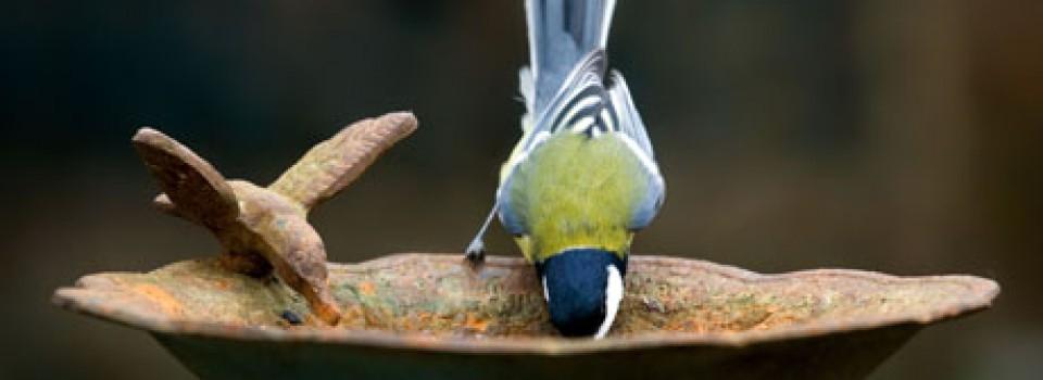 madáritató