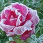 Január a kertben